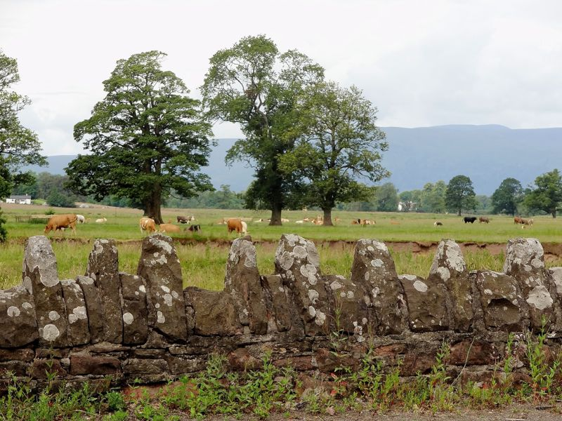 Schottland - Steinmauer