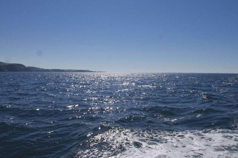 Schottland - Whale Watching