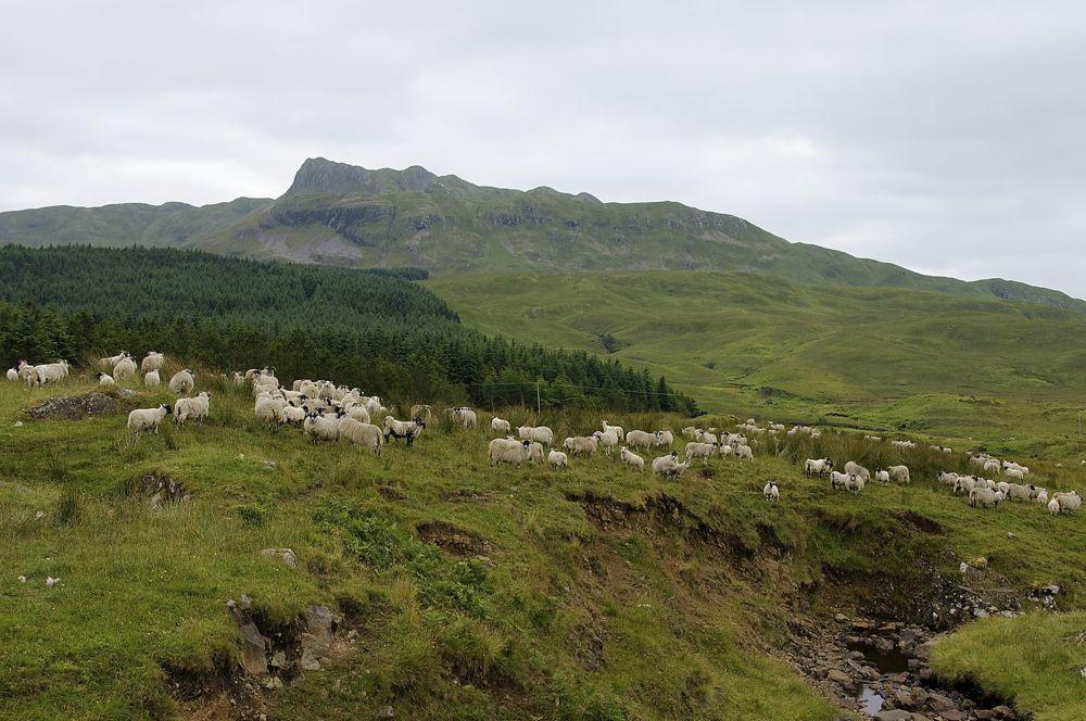 Schottland Küstenlandschaft