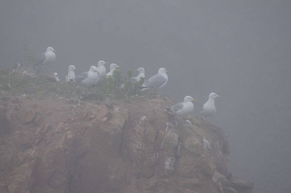 Schottland - Longhaven Cliffs