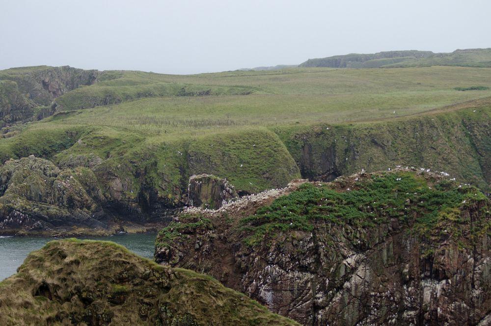 Schottland Longhaven Cliffs